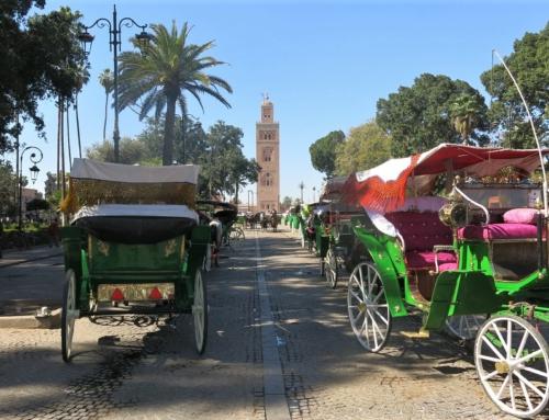 Paluu Marokkoon